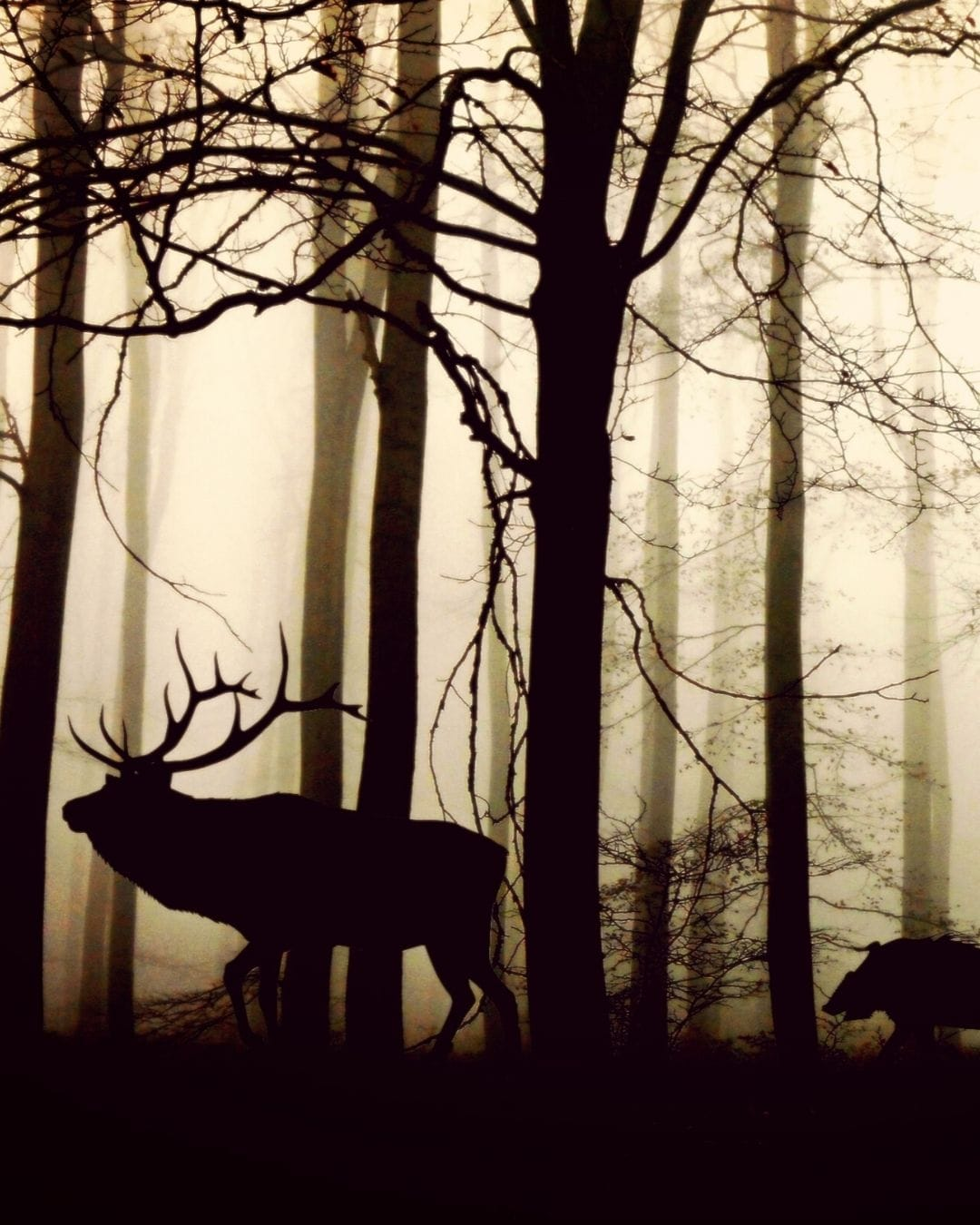 briedis un mežacūka - suunto traverse alpha fons - suuntopulksteni.lv